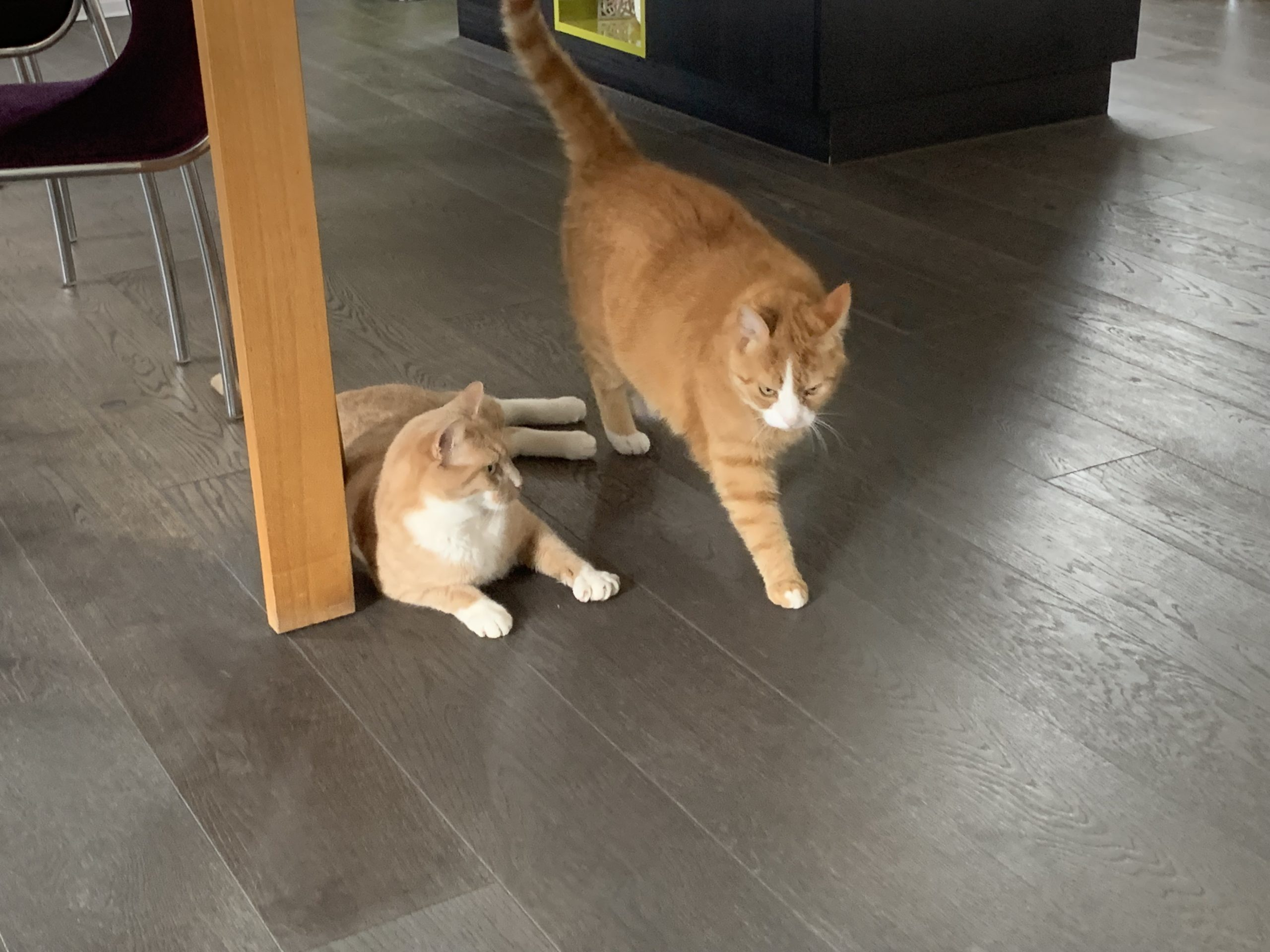 Roucky & Vixy à la maison